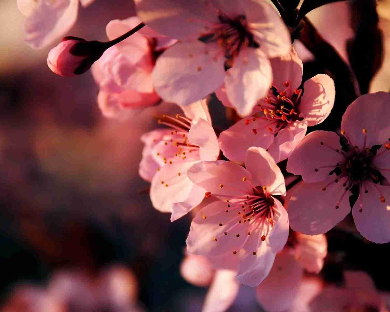 http://hq-wallpapers.ru/wallpapers/13/hq-wallpapers_ru_flowers_62392_1280x1024.jpg