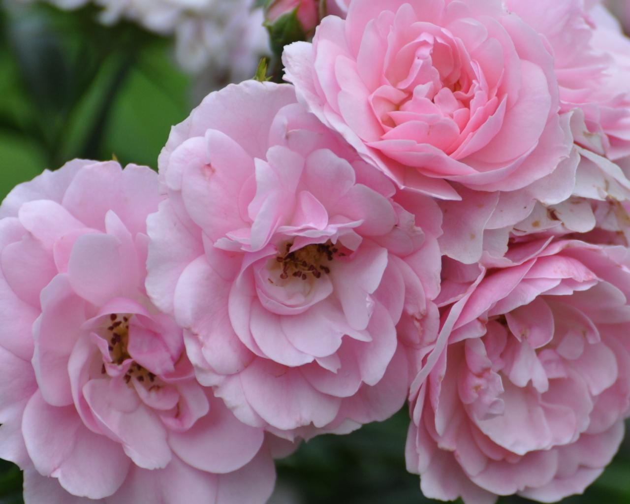 Цветы лето обои для рабочего стола