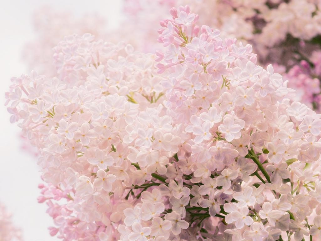 Картинки нежность цветы 5
