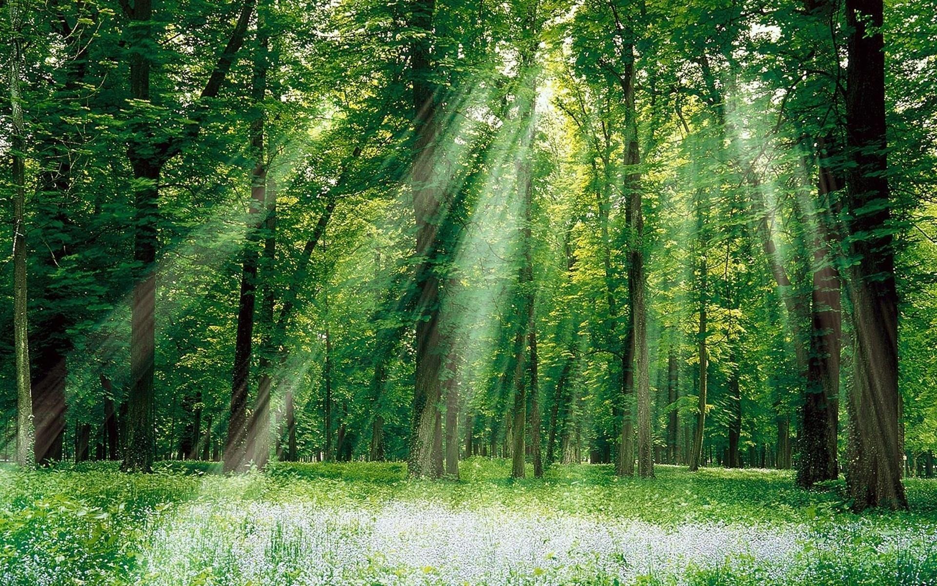 Фотки в лесу 11 фотография