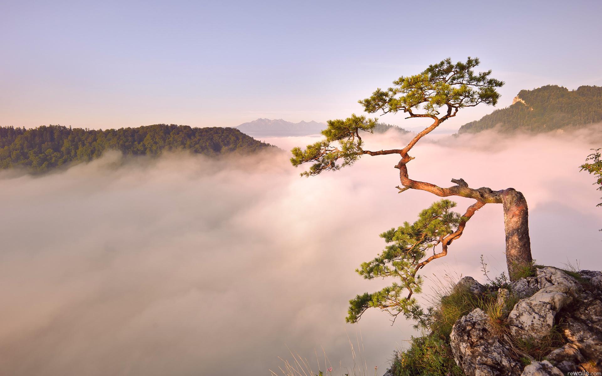 Горы туман дерево 1920x1200