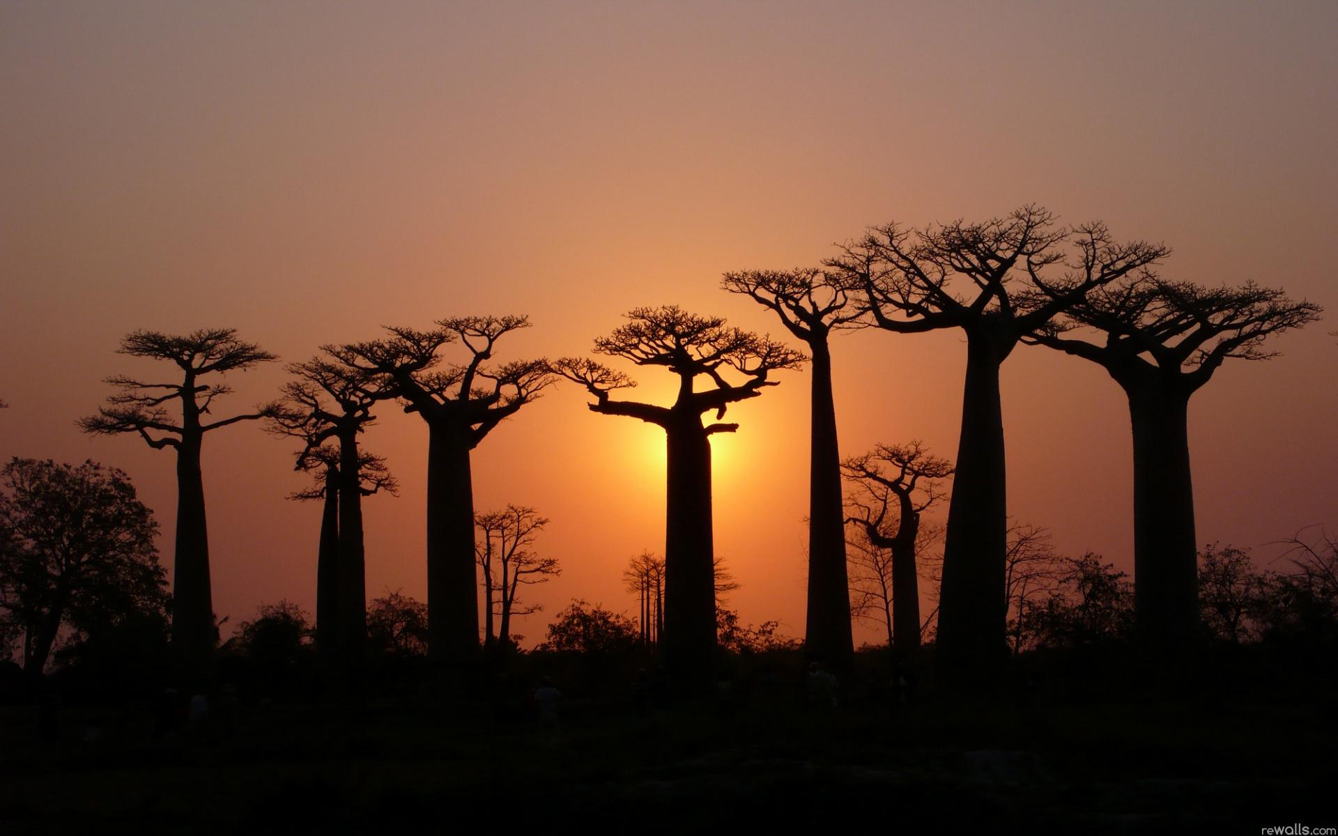 Картинки природы африки на рабочий стол