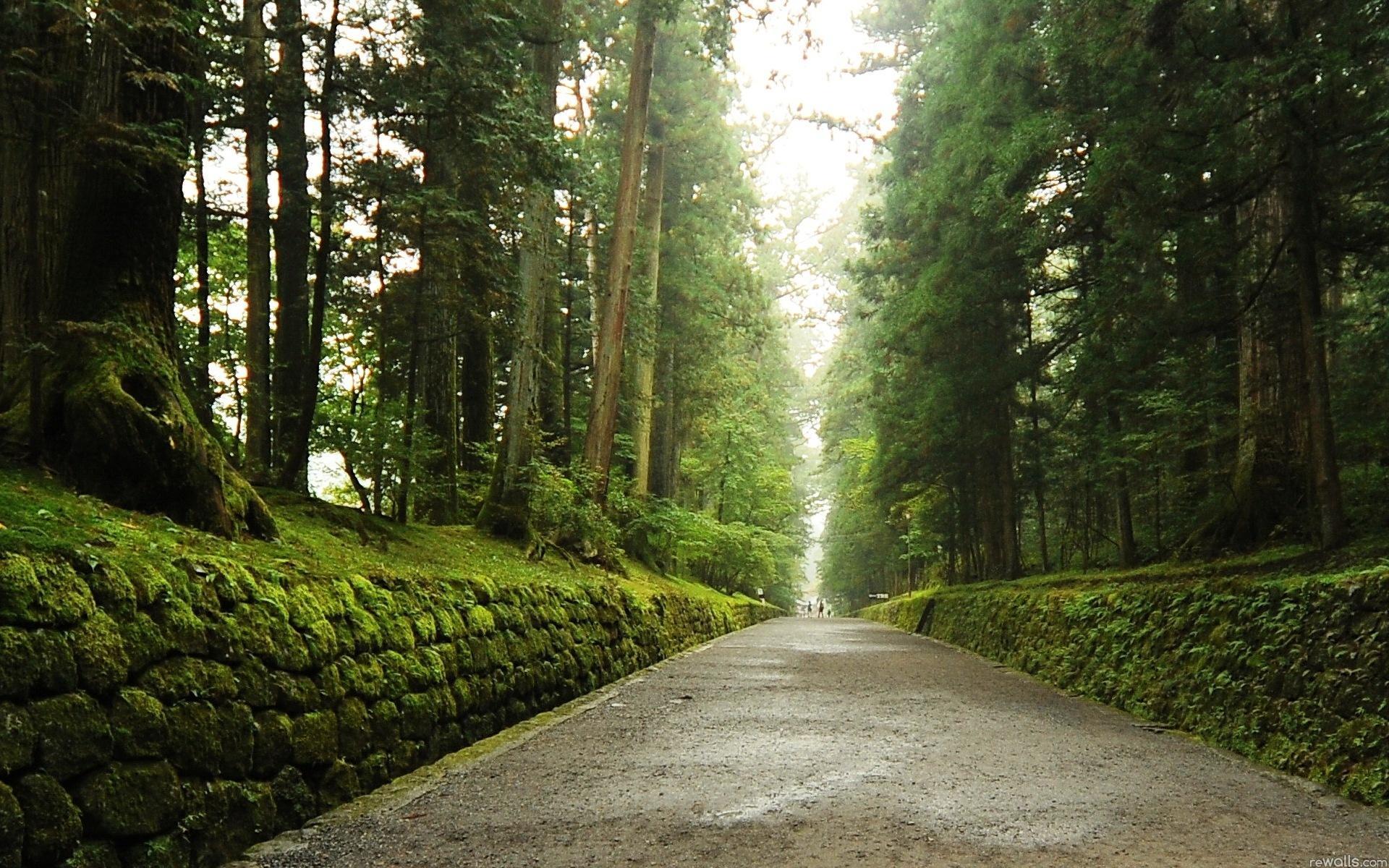 Обои природа дорога лес природа лето