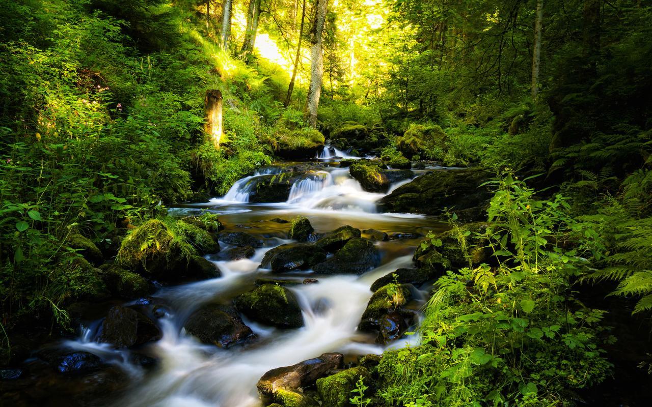Лесной природы на рабочий стол 1280x800