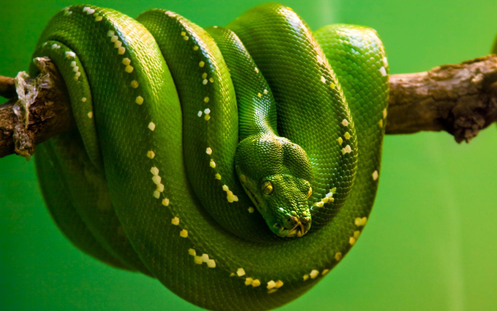 Яркие зеленого цвета с тропической