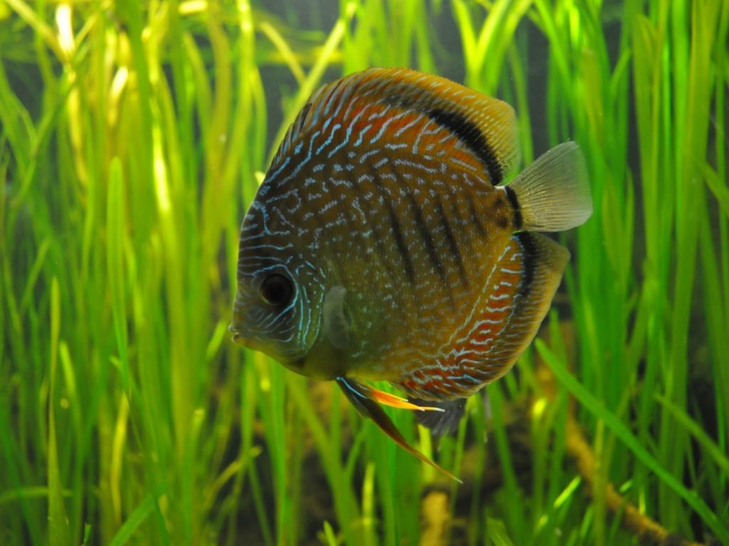 Рыбка в аквариуме обои для рабочего стола, картинки, фото ...
