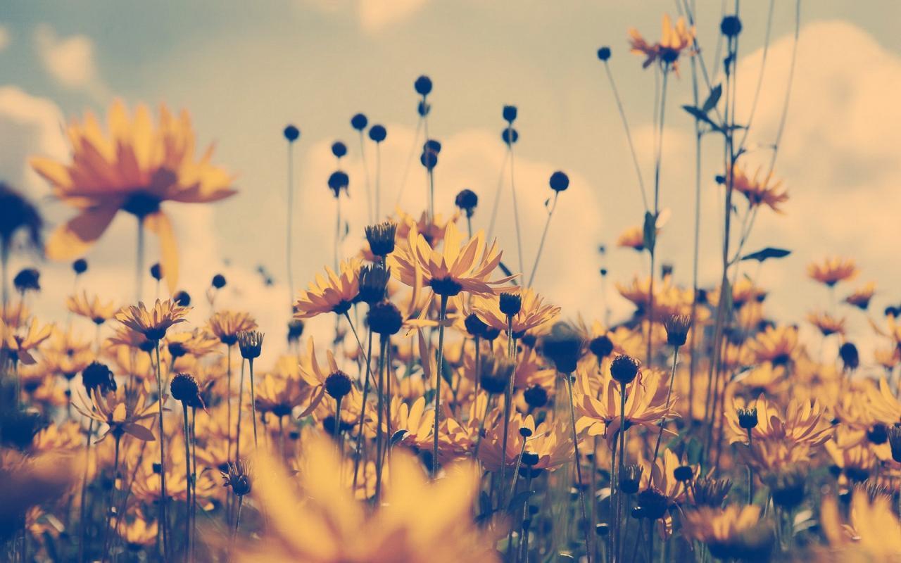 Реклама обои цветы полевые цветы