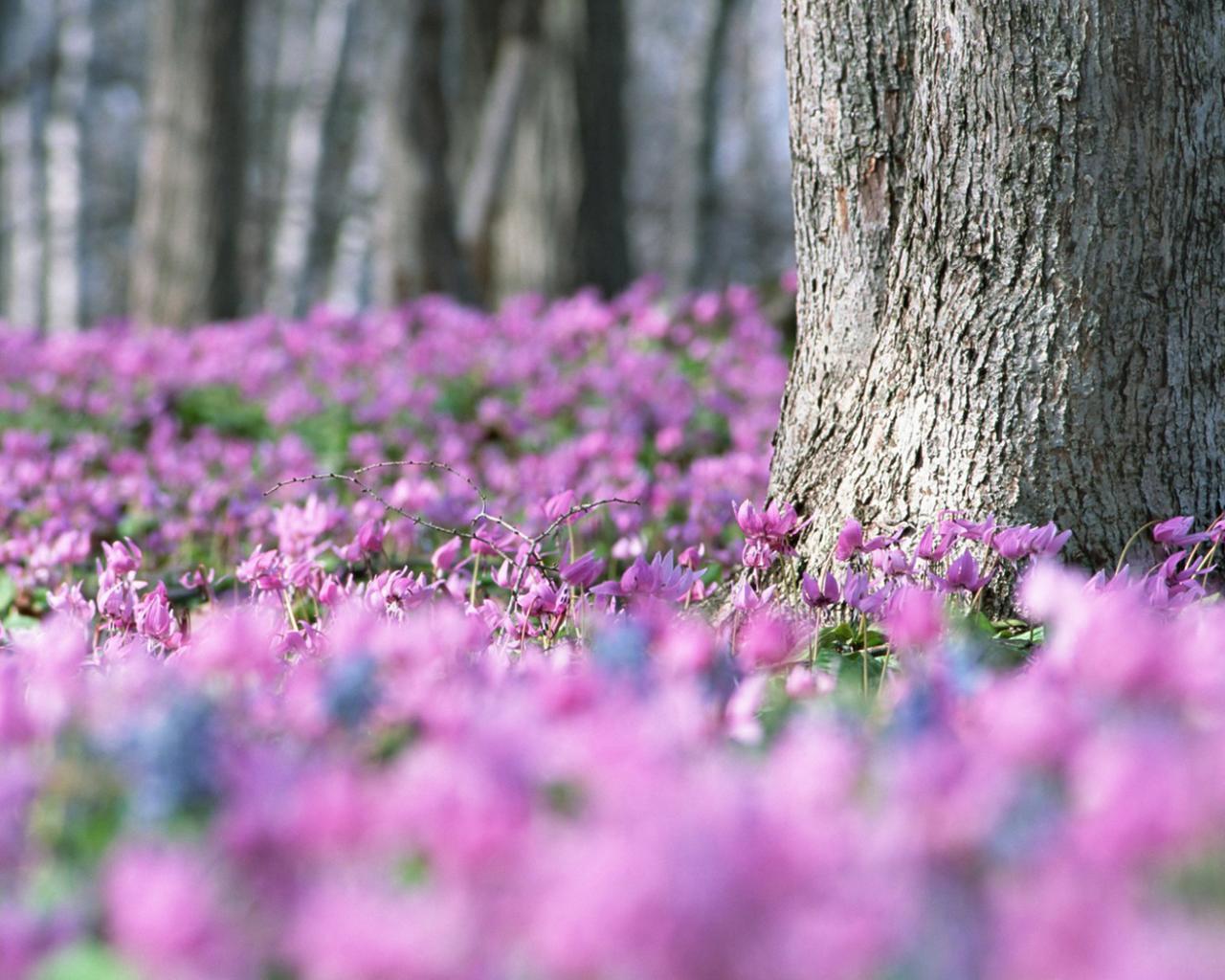 знакомые цветы в лесу