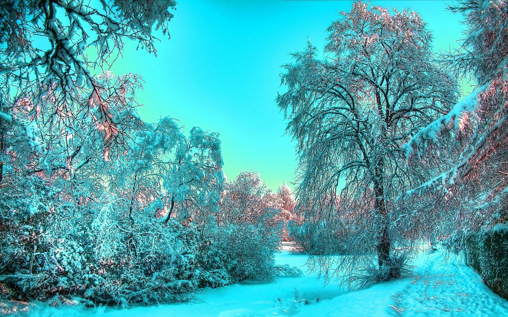 Зимний лес сказочная красота обои