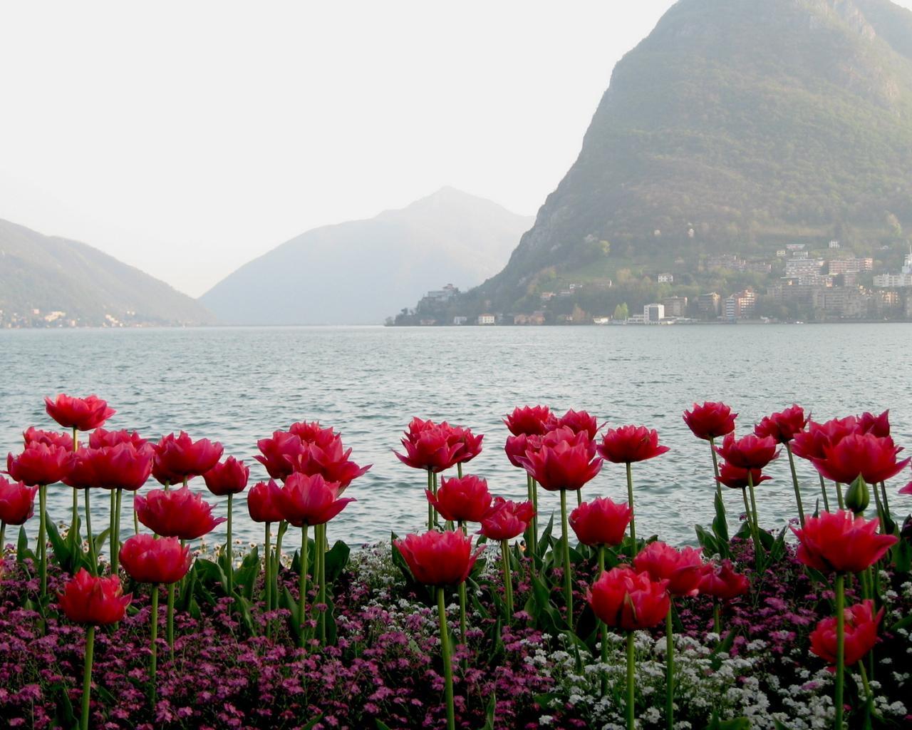 Весна цветы горы вид туман обои для