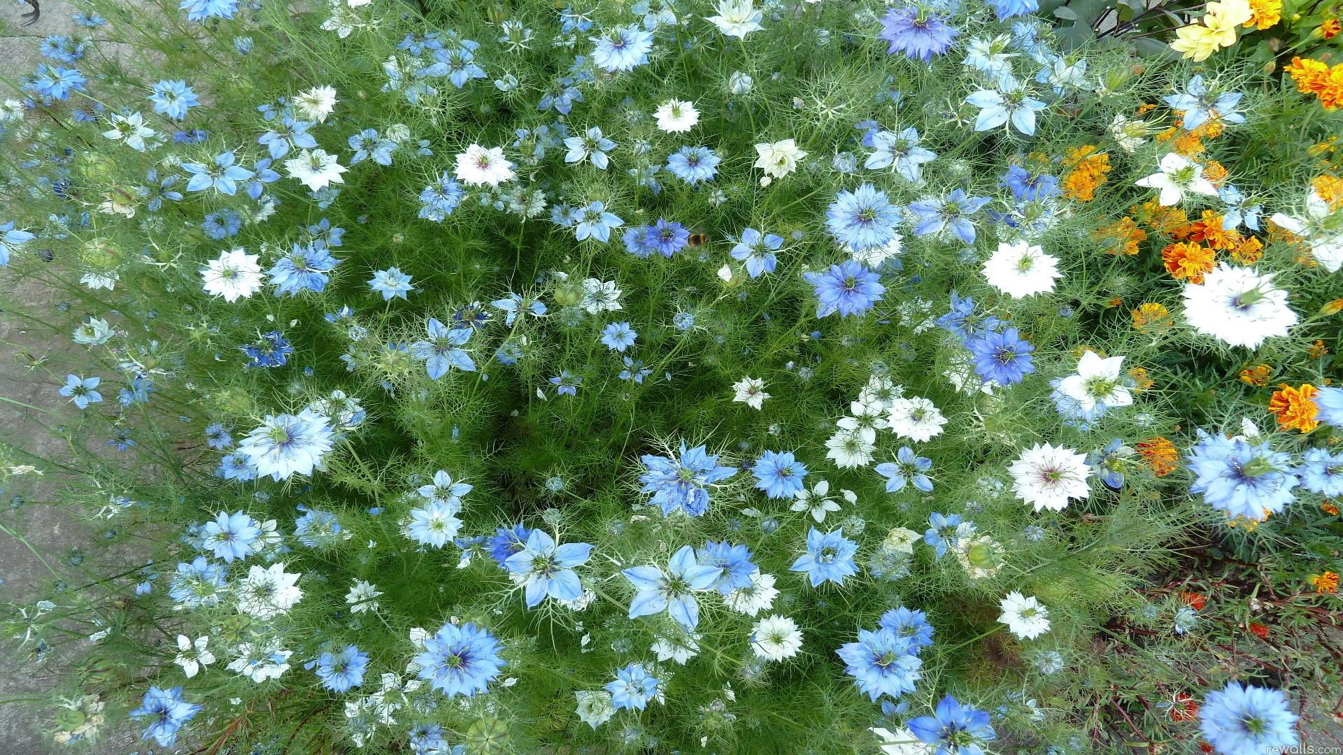 фото лето цветы:
