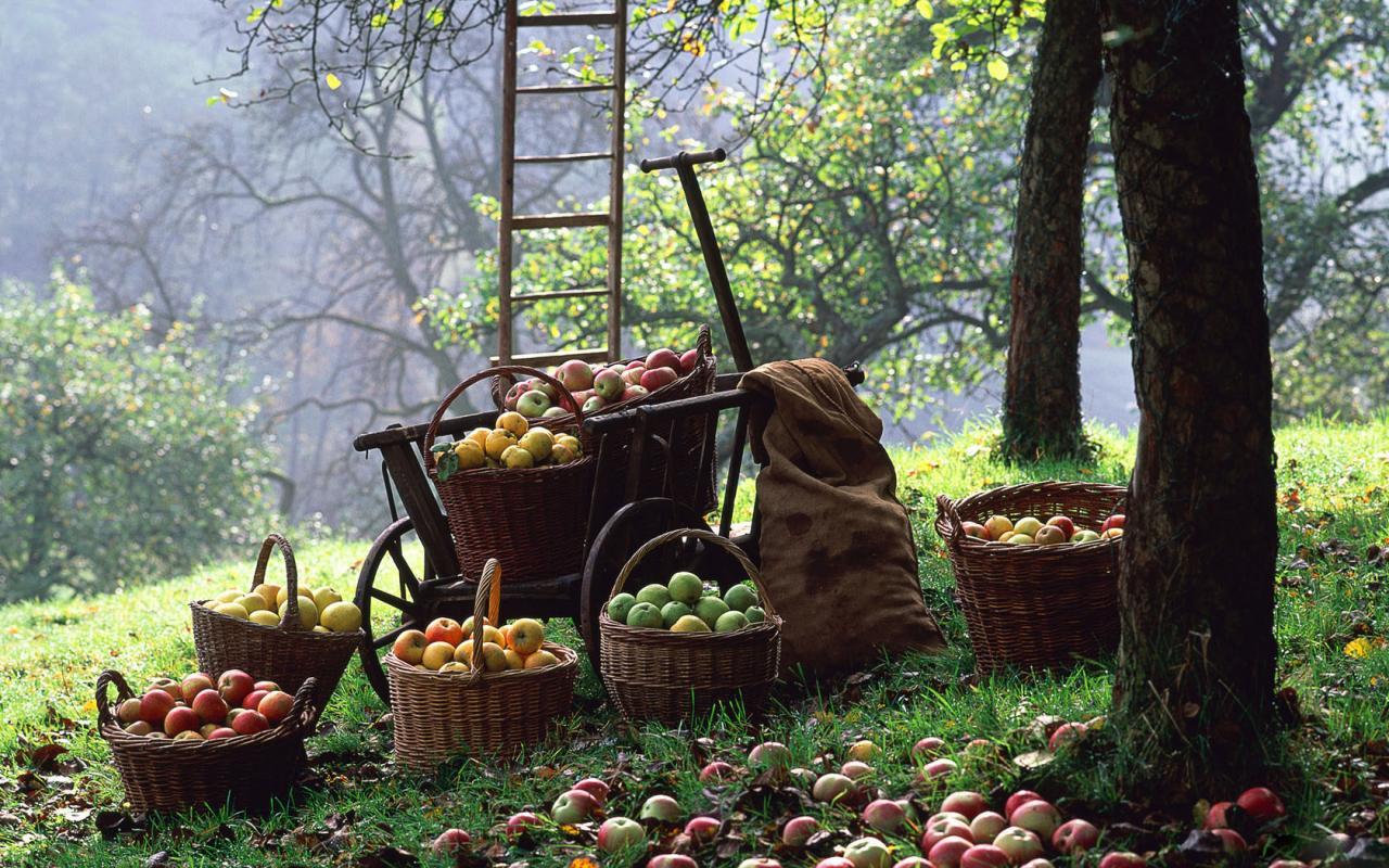 Фруктовый сад обои для рабочего стола, картинки, фото ...  Фруктовый Сад Обои