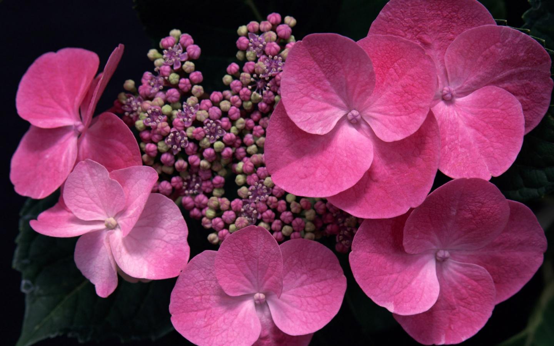 Красивые цветы на ваш рабочий стол