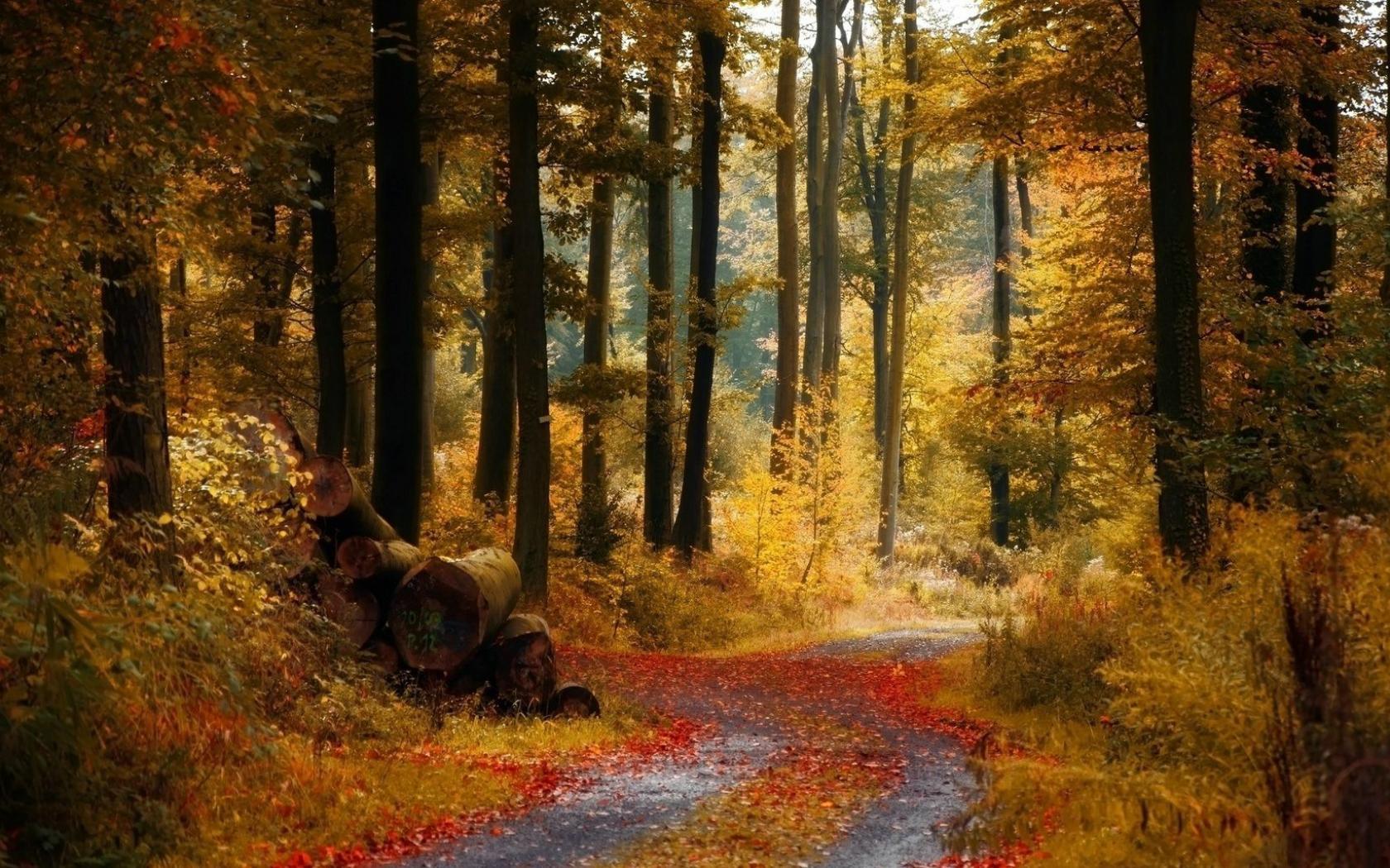 Красота осеннего леса скачать обои