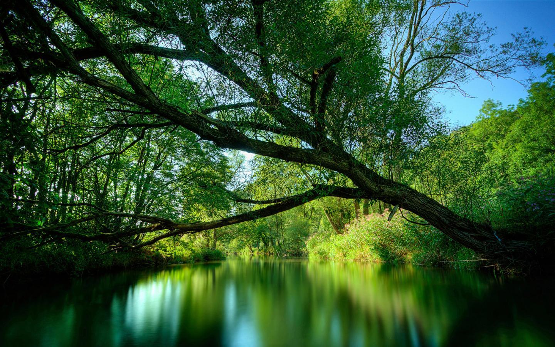 Природа красивые природа скачать