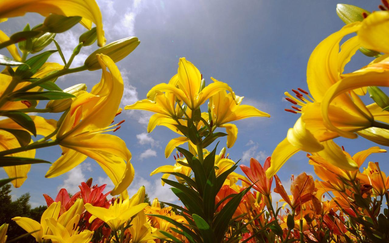 Обои цветы красивые и яркие цветы 1280x800