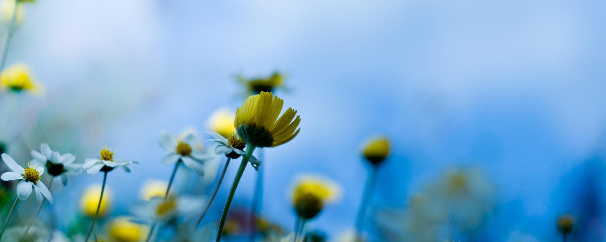 Обои цветы луговые цветы красивый