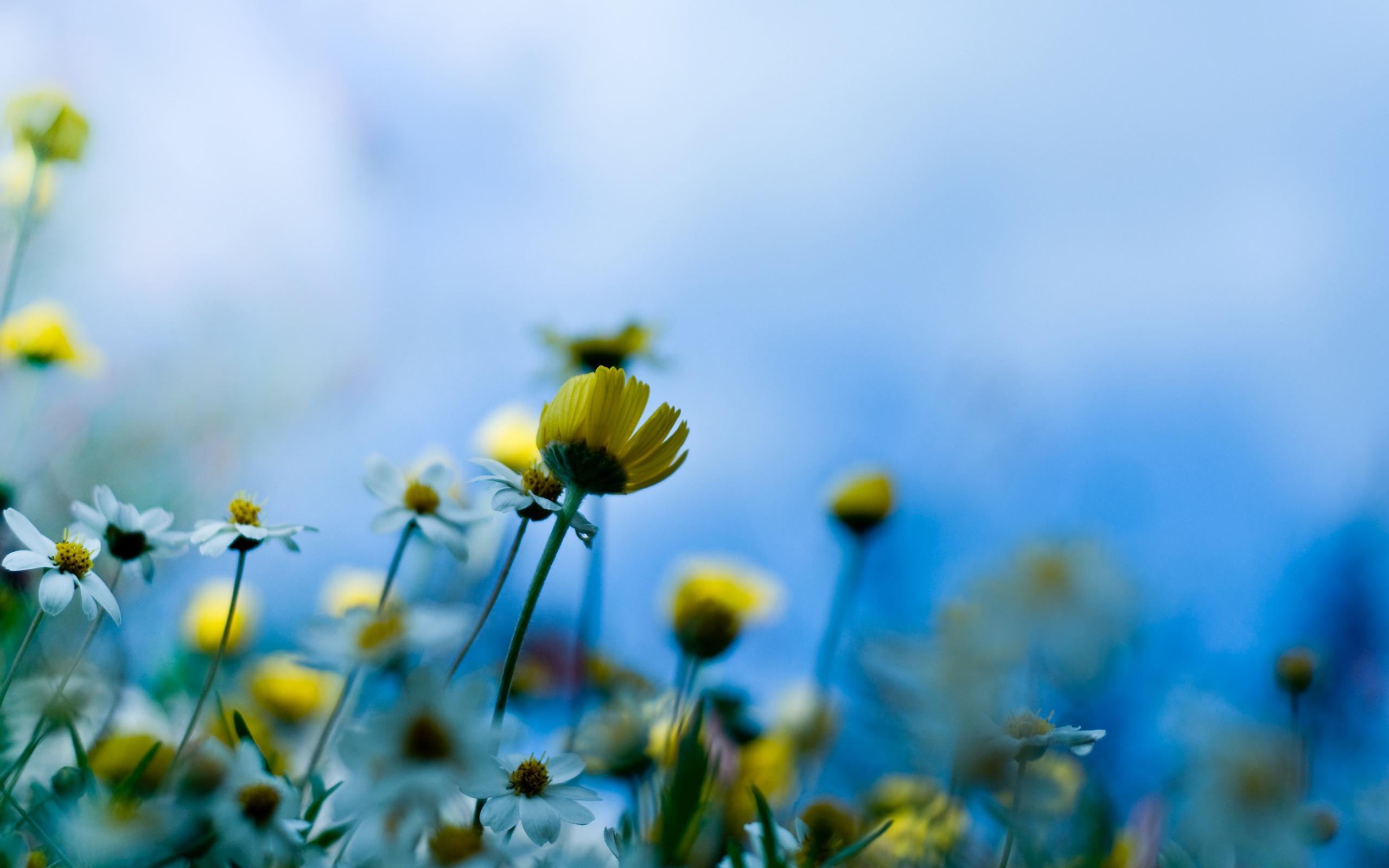Цветы луговые цветы красивый голубой