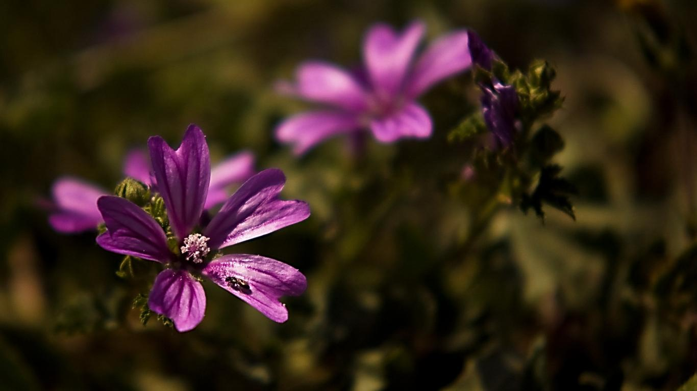 Реклама обои цветы цветы муровей на