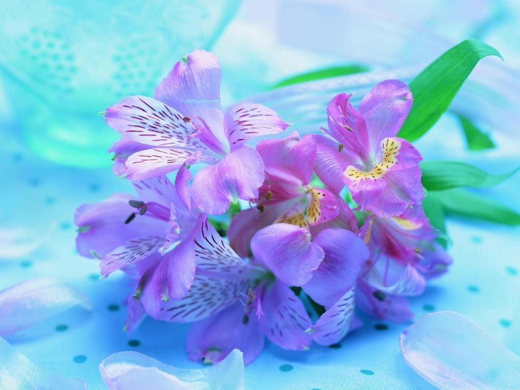 Букет ирисов яркие нежные цветы 1024x768