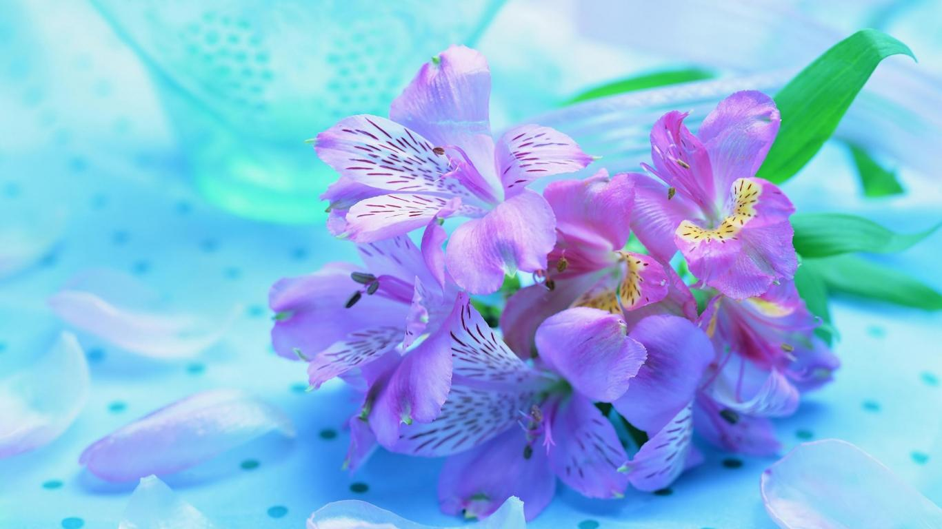 Букет ирисов яркие нежные цветы 1366x768