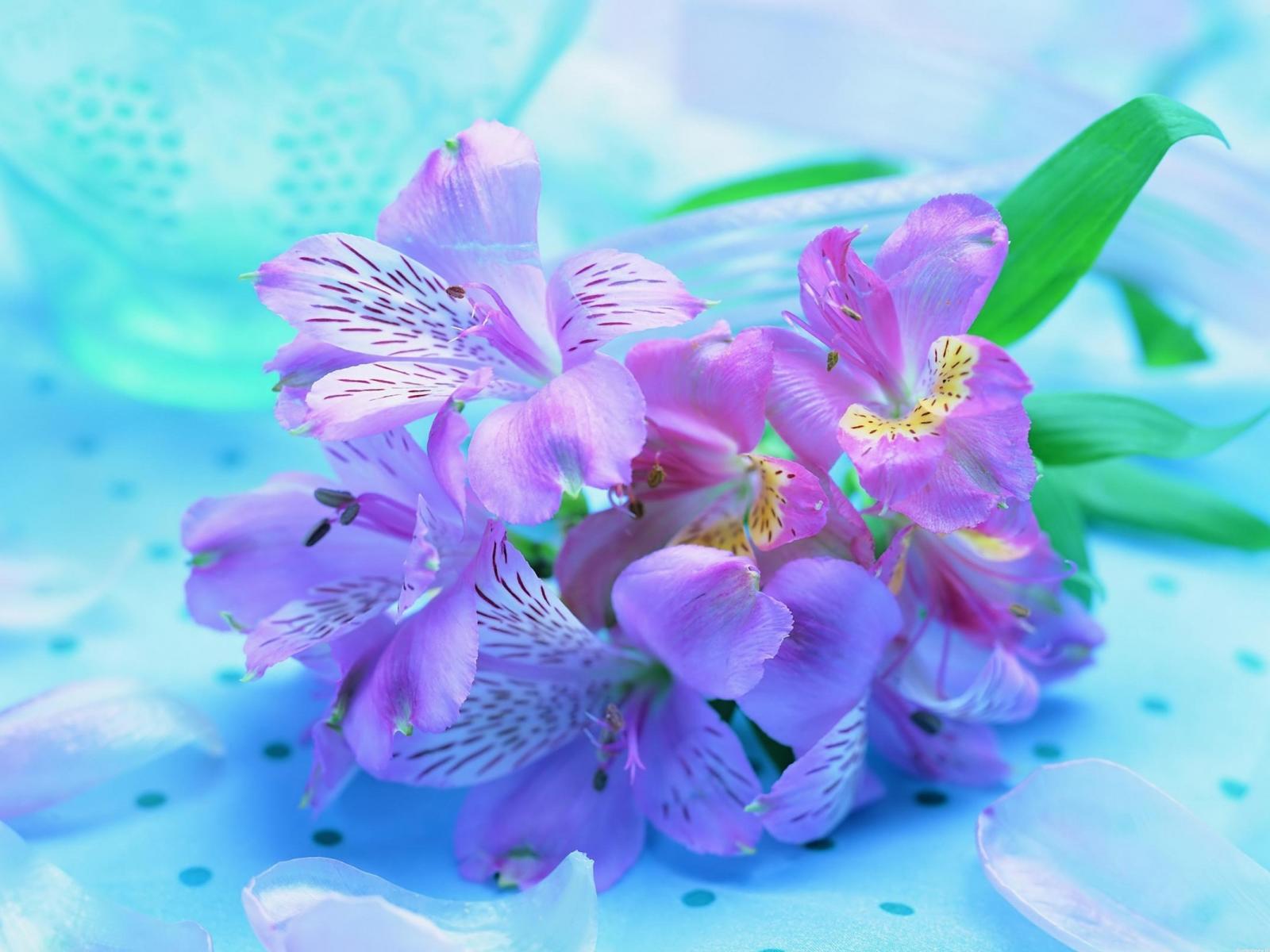 Букет ирисов яркие нежные цветы 1600x1200
