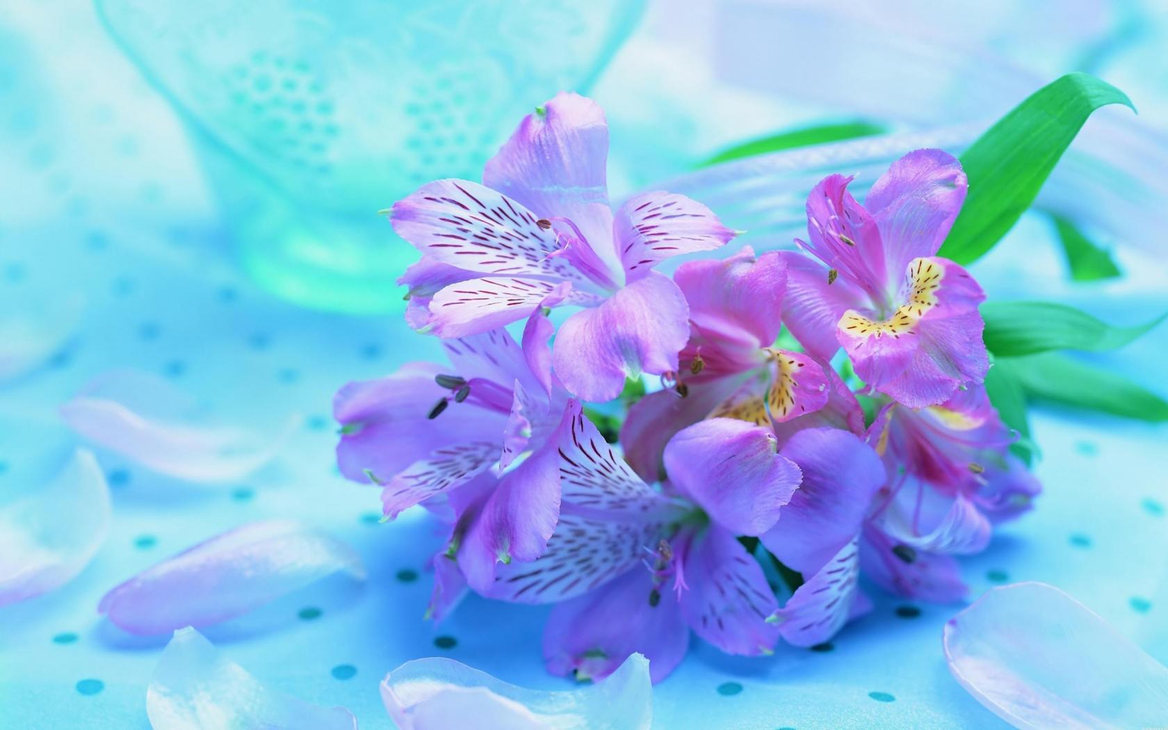 Букет ирисов яркие нежные цветы 1680x1050