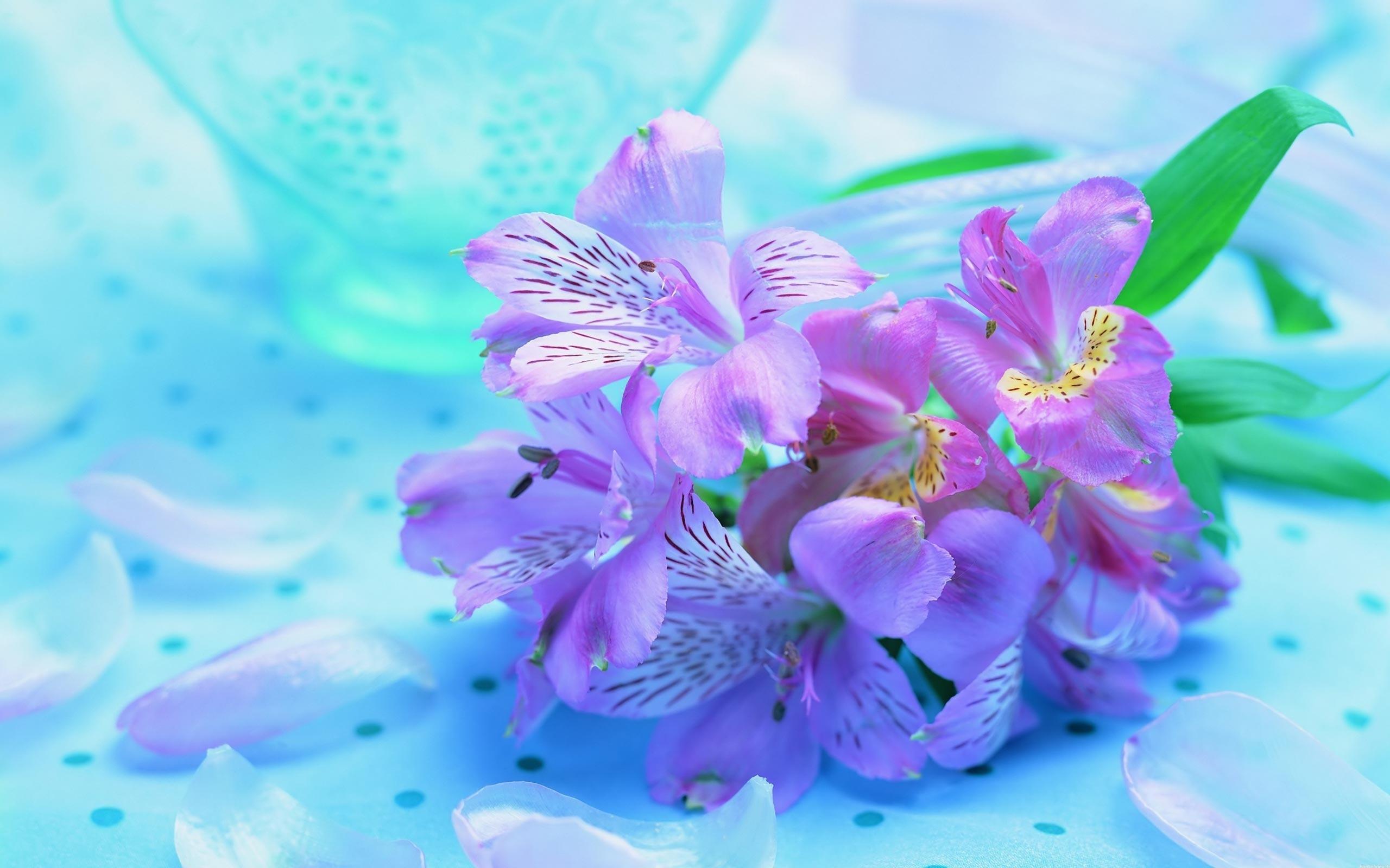Букет ирисов яркие нежные цветы 2560x1600