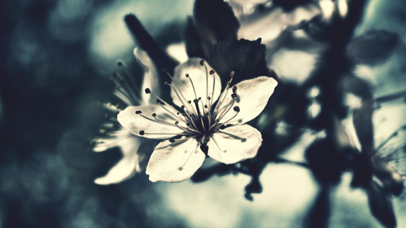 Цветок как в сказке обои для рабочего