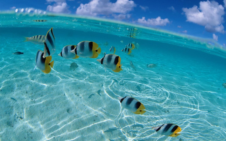 Живые обои аквариум скачать бесплатно на андроид 5