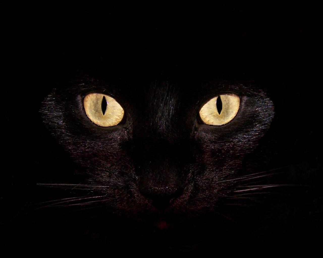 Черный кот обои для рабочего стола