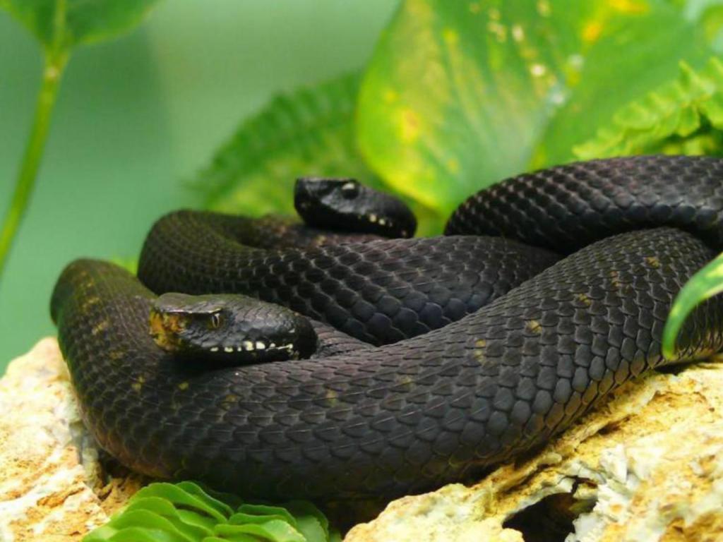 Змеиный остров бразилия фото 2