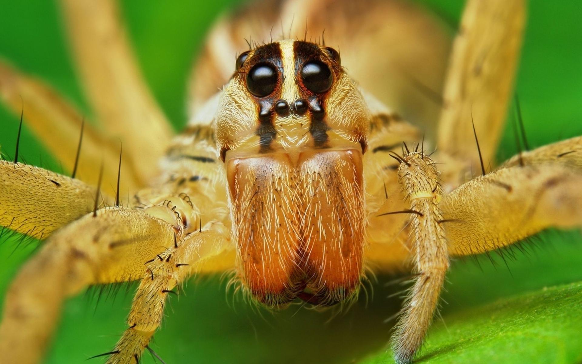 фото паука hd'
