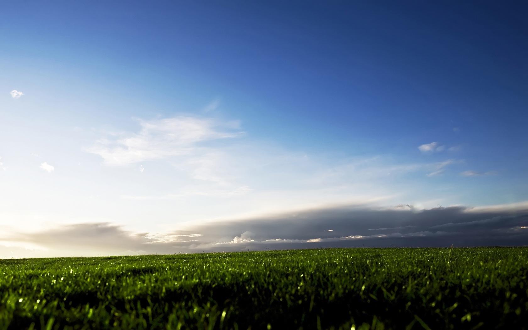 Зеленая трава на фоне неба 1680x1050