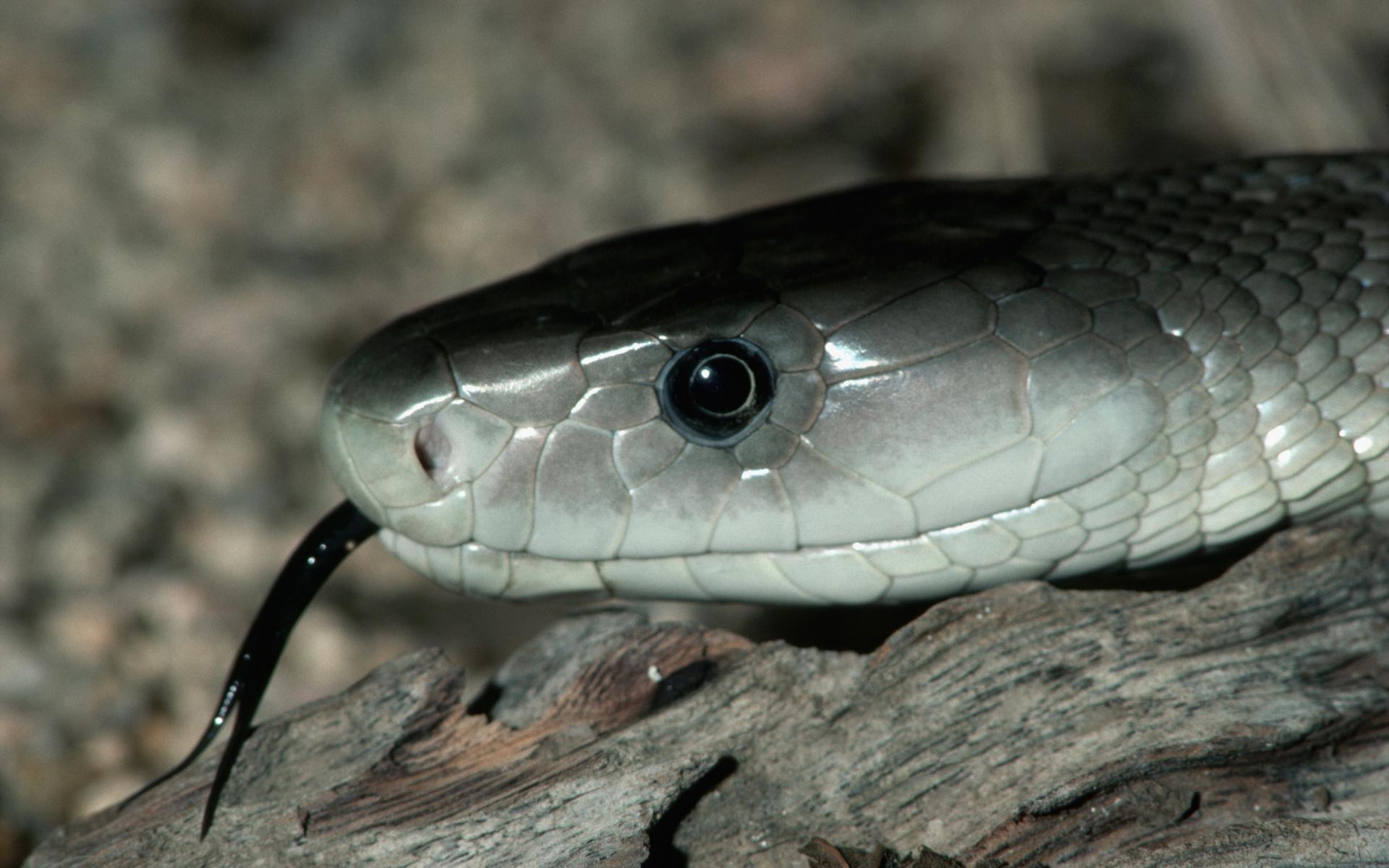 змей на рабочий стол