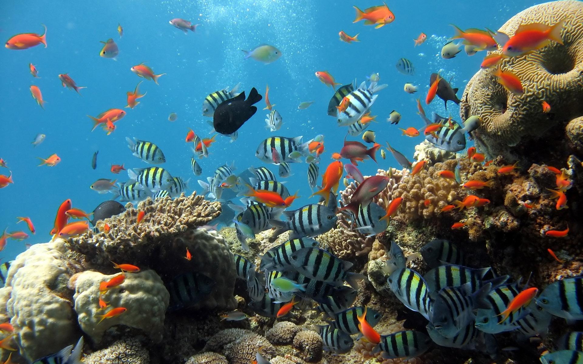 Рыбки картинки для детей цветные - 8bff