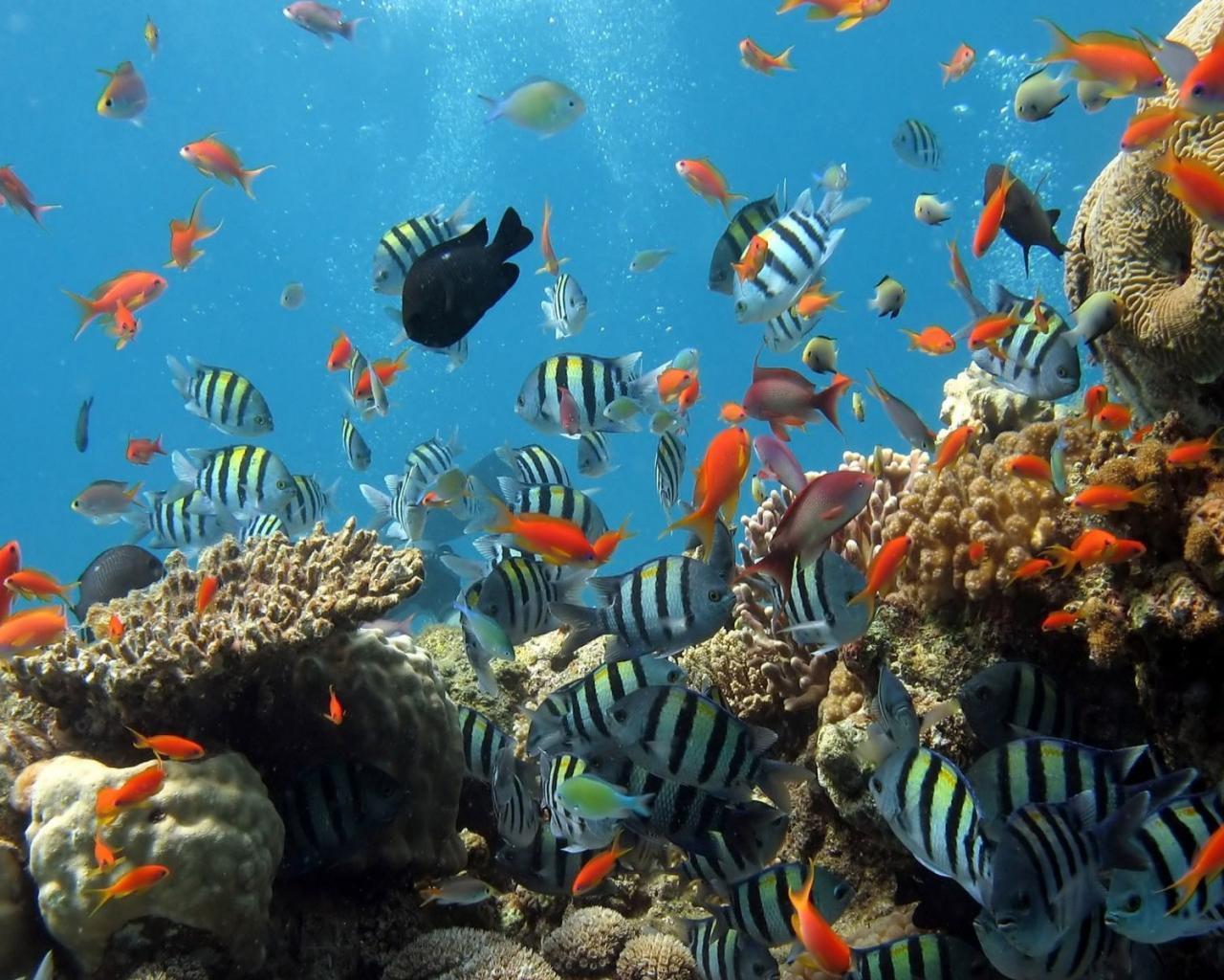 Подводный мир океана 1280x1024