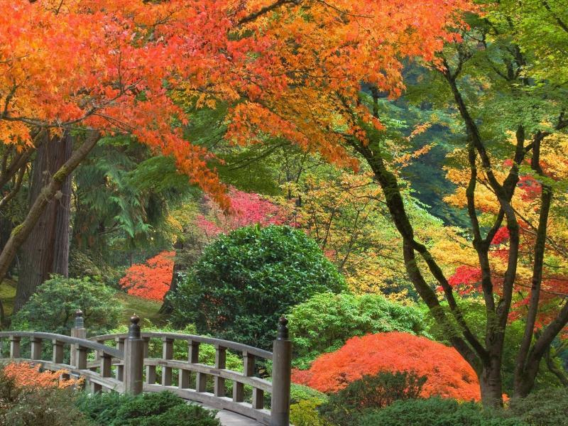 Золотая осень в ухоженном парке обои