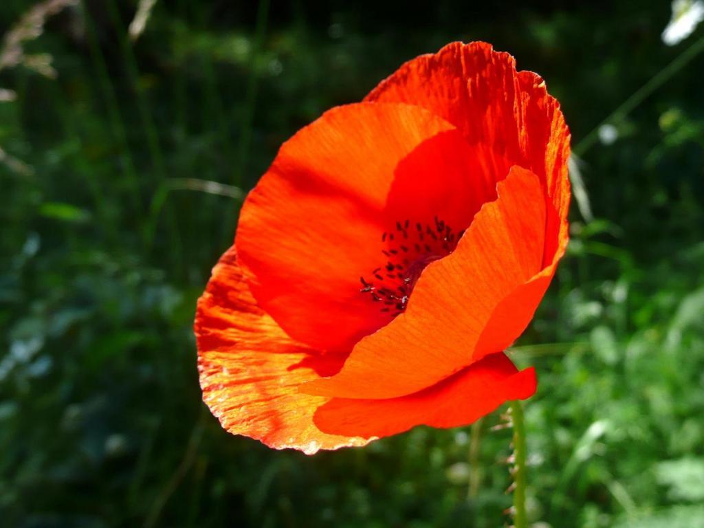 Качественные картинки цветы 3