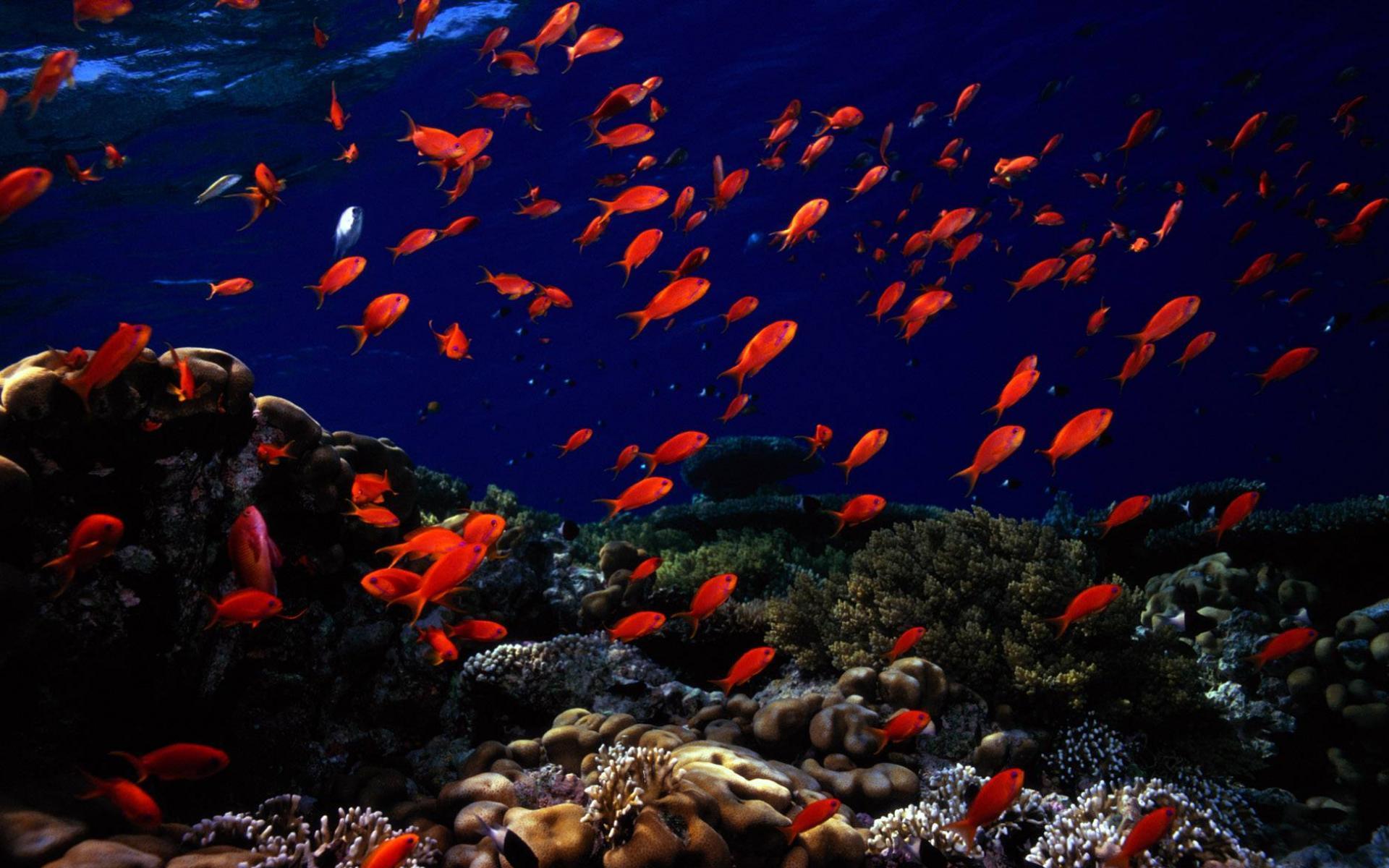 Рыбки картинки для детей цветные - fd4