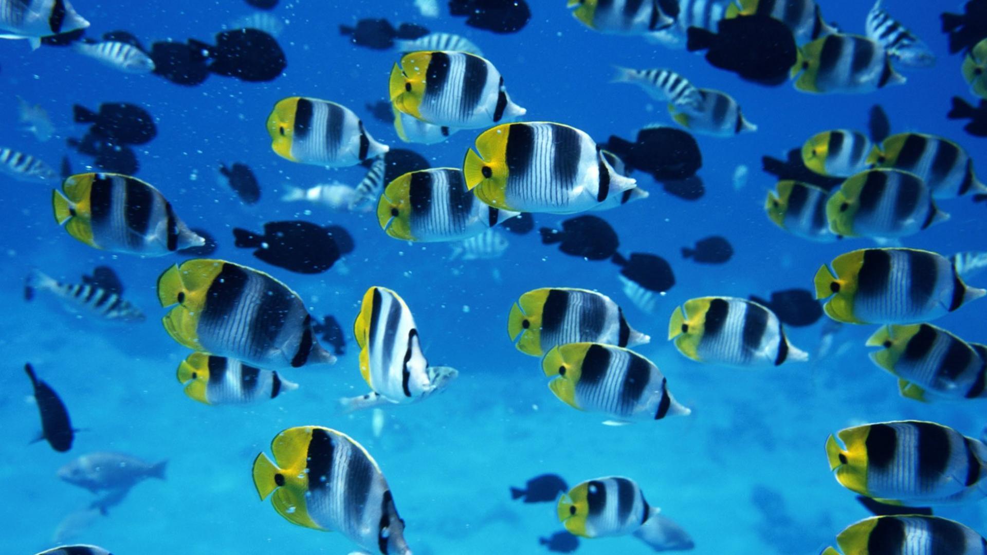 Рыбки обои для рабочего стола