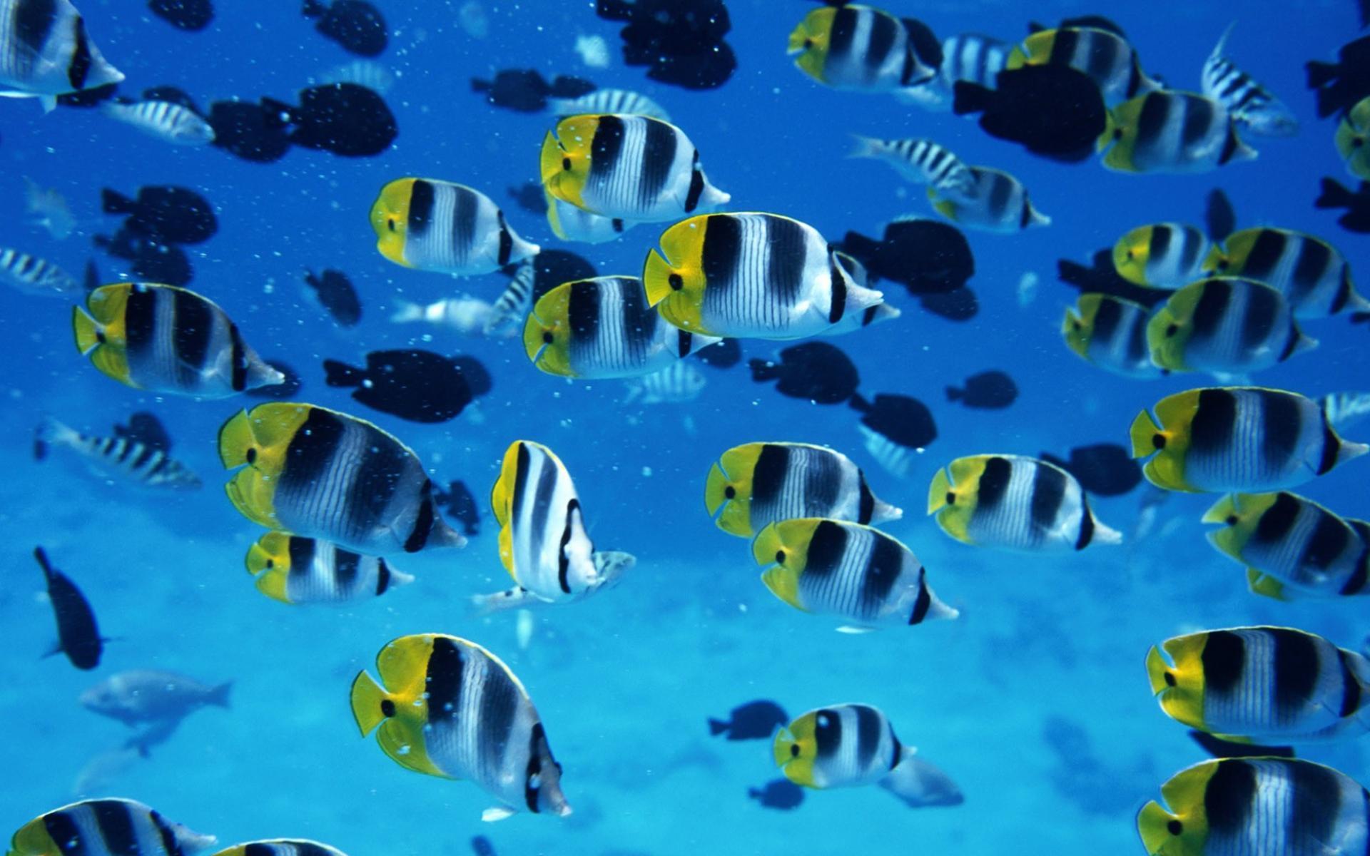 Скачать плавающие рыбки обои для рабочего стола 3