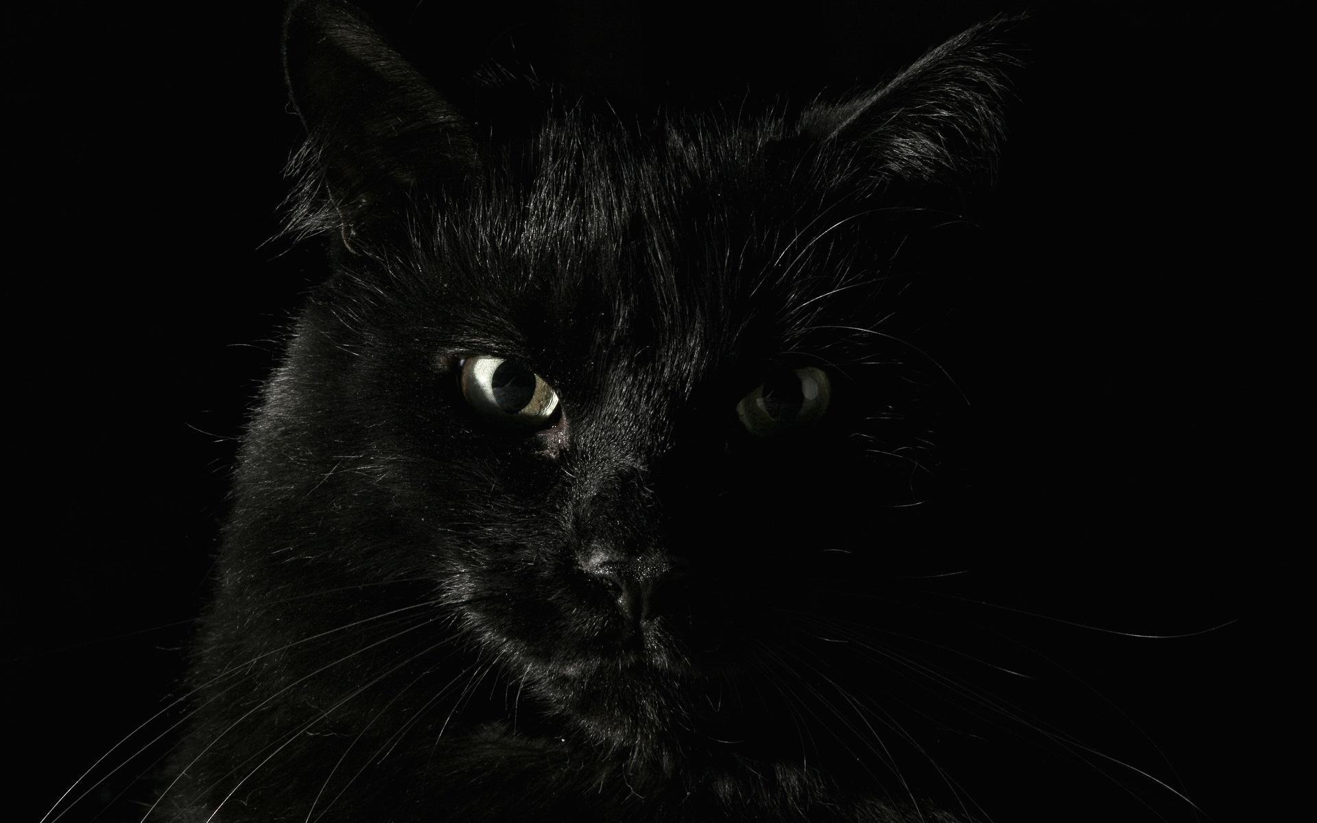 Фон рабочего стола черный кот