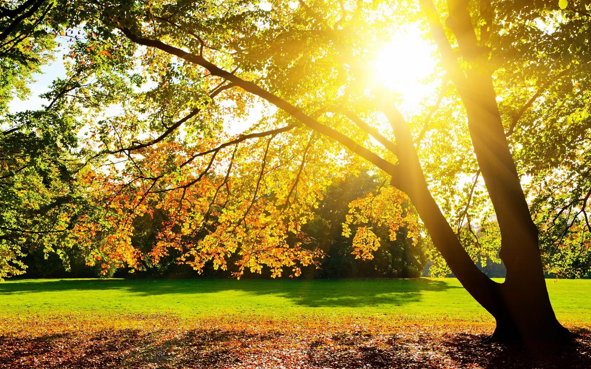 осенний солнечный день фото