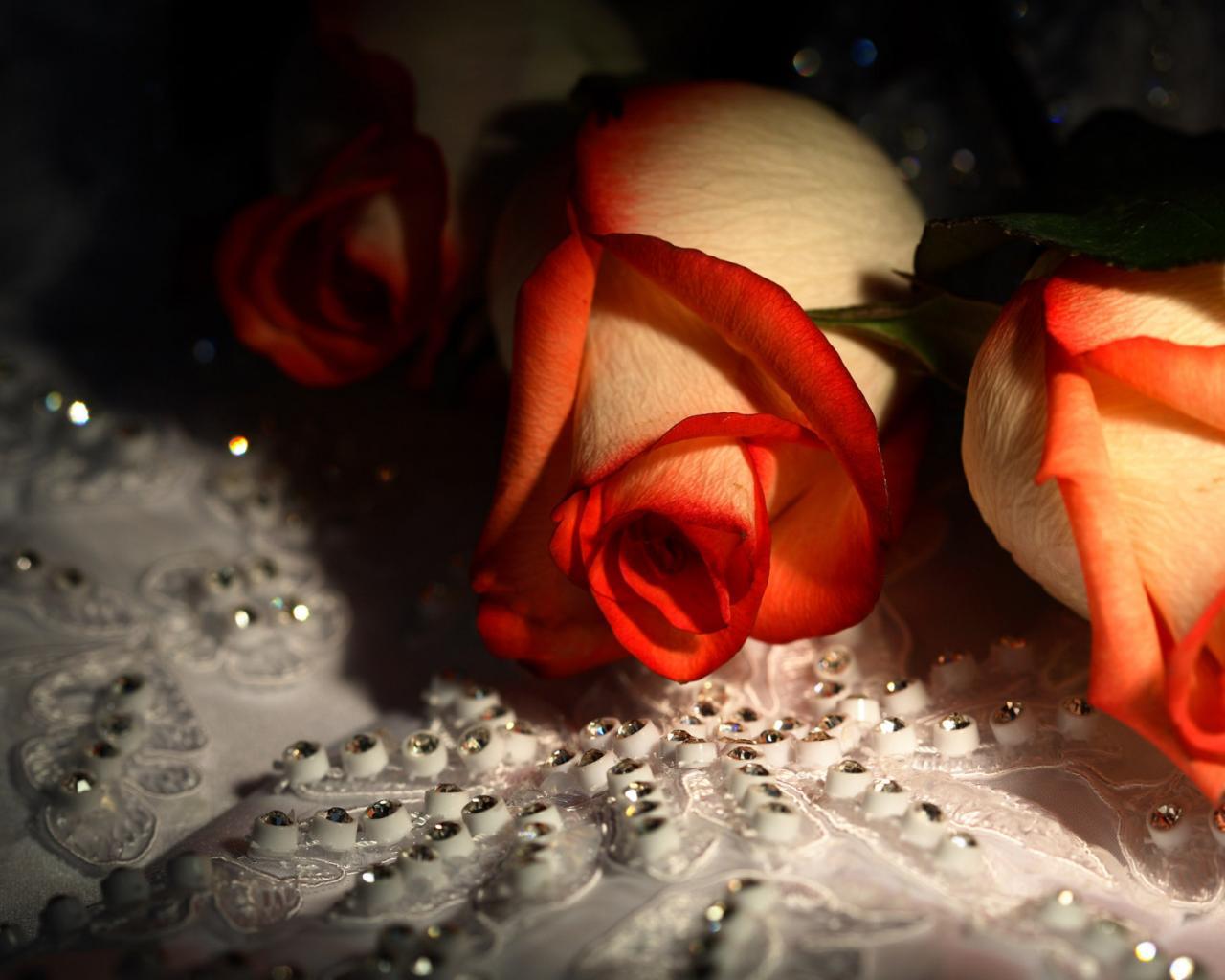 Розы для гламурных девочек обои для