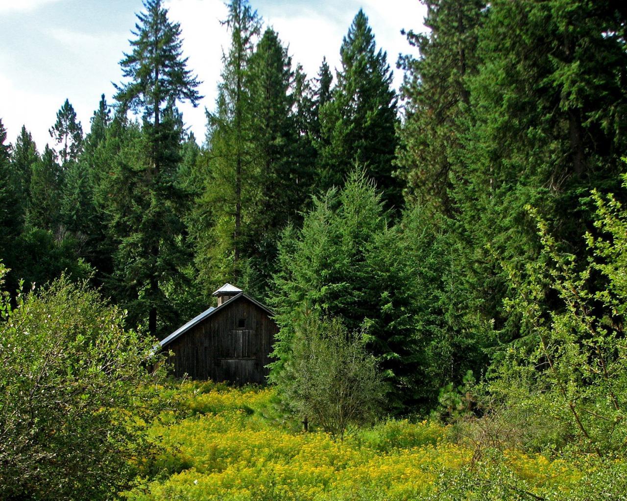 Дом в лесу скачать бесплатно обои для