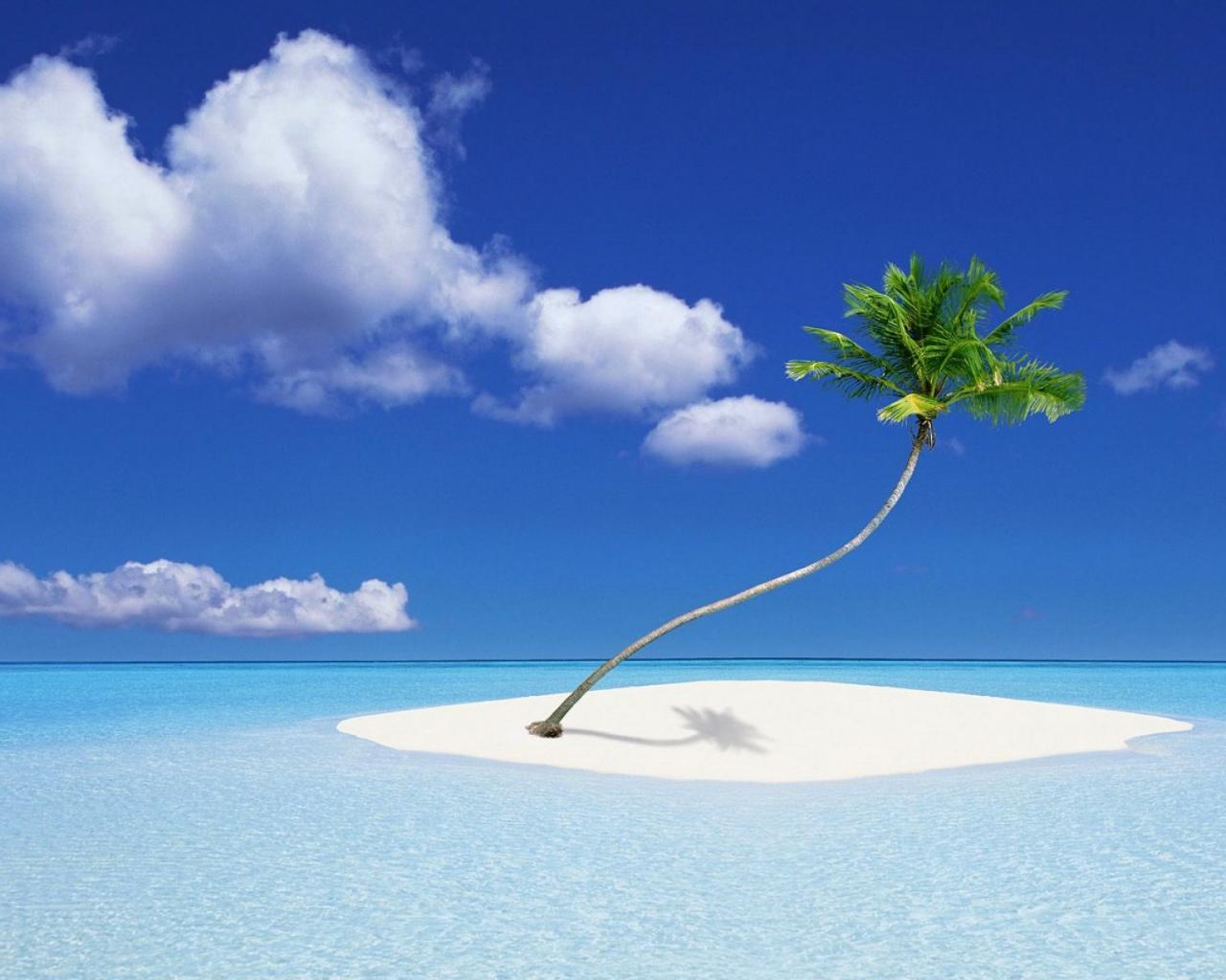 Обои природа пальма в океане 1280x1024