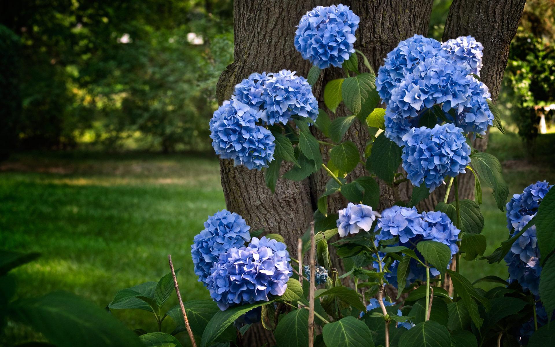 Синие цветы обои для рабочего стола