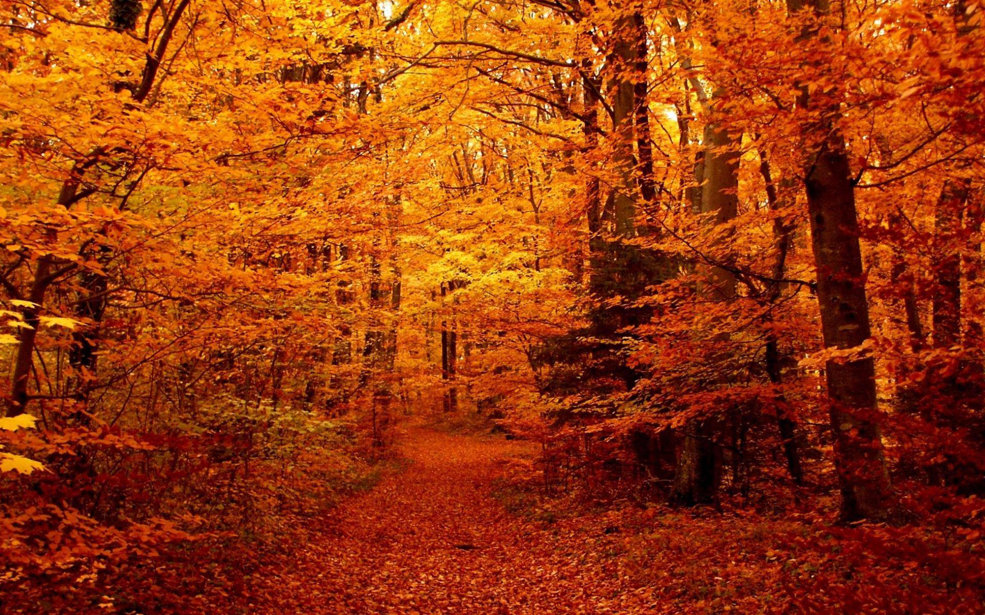 фото просто осень