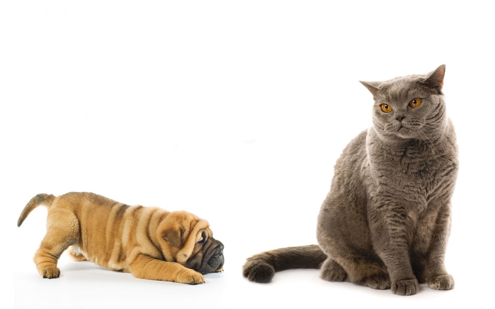 Кошка и собака обои для рабочего стола, картинки, фото ...